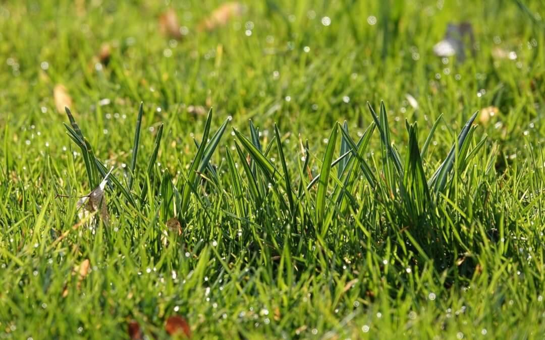 Keine weitere Bebauung von Grünflächen in Essen!